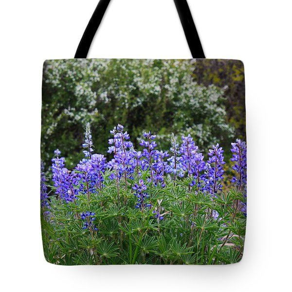 Tote Bag featuring the photograph Silvery Lupine Black Canyon Colorado by Janice Rae Pariza