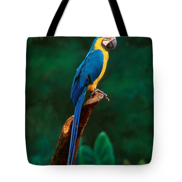 Singapore Macaw At Jurong Bird Park  Tote Bag by Anonymous
