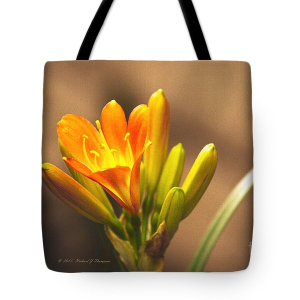 Tote Bag featuring the photograph Single Kaffir Lily Bloom by Richard J Thompson