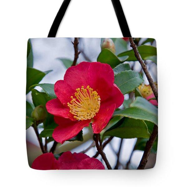 Single Petal Red Camellia Flowers Art Print Tote Bag
