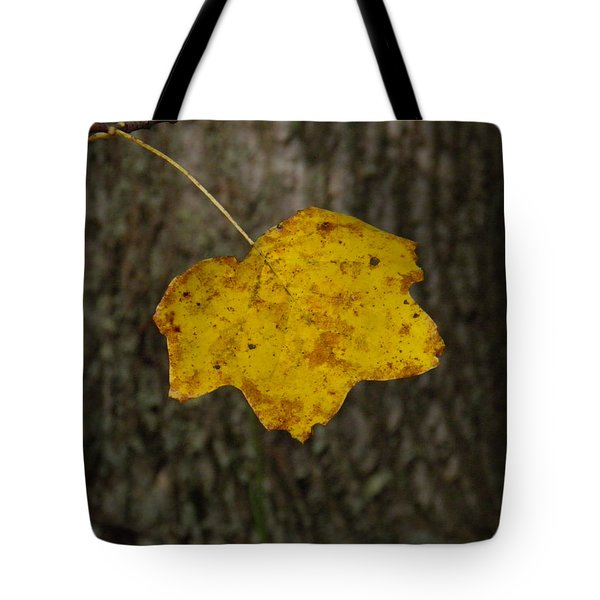 Tote Bag featuring the photograph Single Poplar Leaf by Nick Kirby