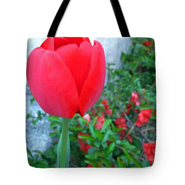 Single Red Tulip Tote Bag by Barbara McDevitt