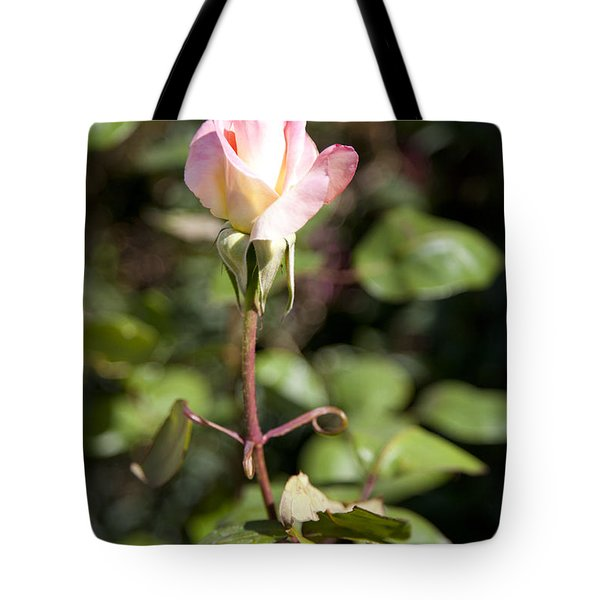 Tote Bag featuring the photograph Single Rose by David Millenheft