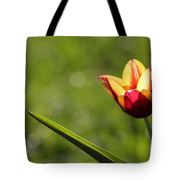 Single Tulip Tote Bag by Kenny Glotfelty