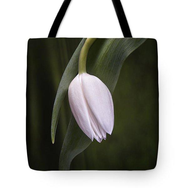 Single Tulip Still Life Tote Bag by Tom Mc Nemar