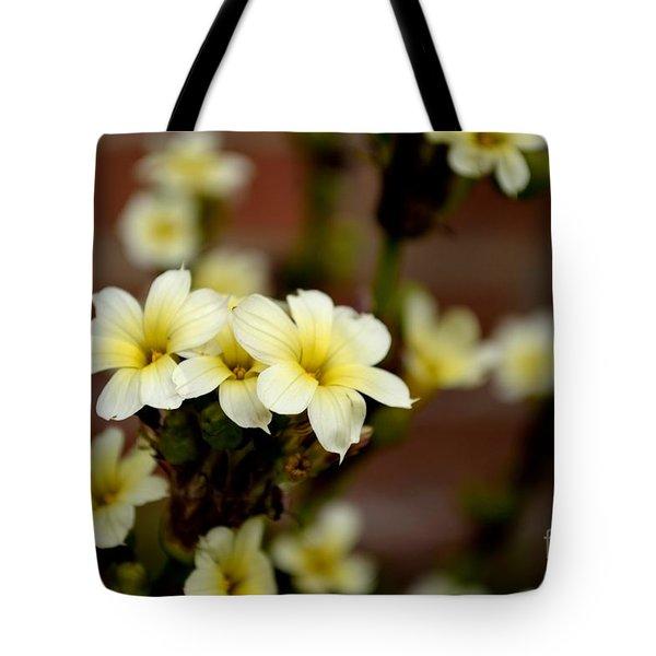 Sisyrinchium Striatum Tote Bag