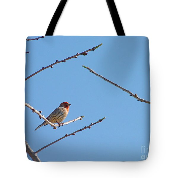 Sky Blue Beauty Tote Bag