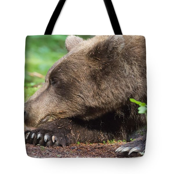 Sleeping Bear Tote Bag by Chris Scroggins