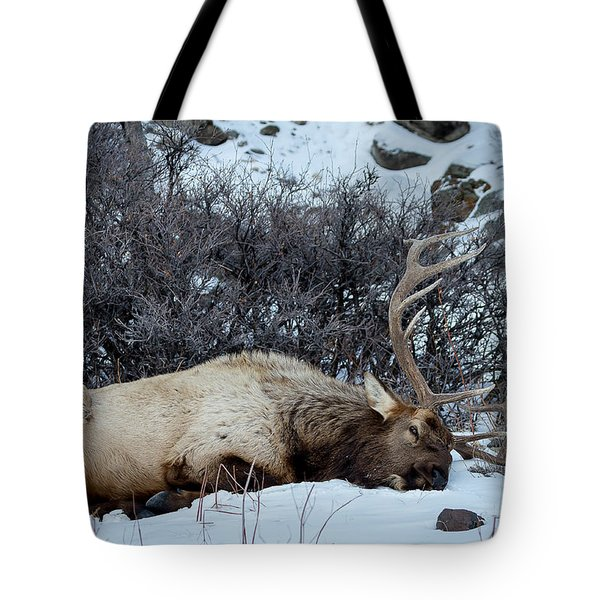 Sleeping Elk Tote Bag