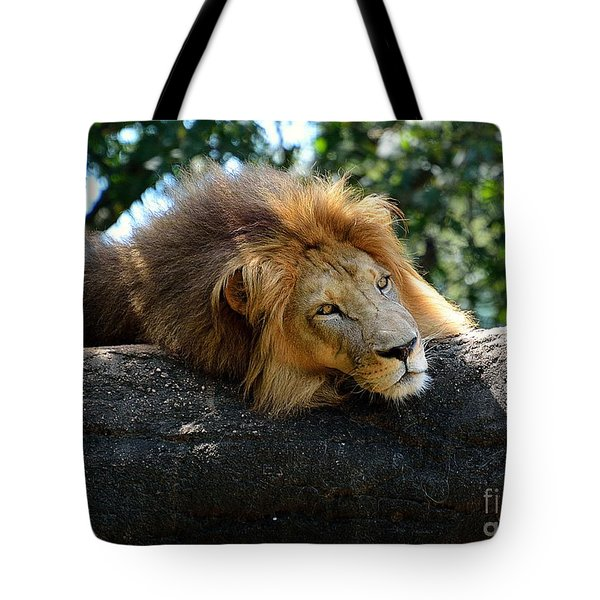 Tote Bag featuring the photograph Thinking Lion by Lisa L Silva