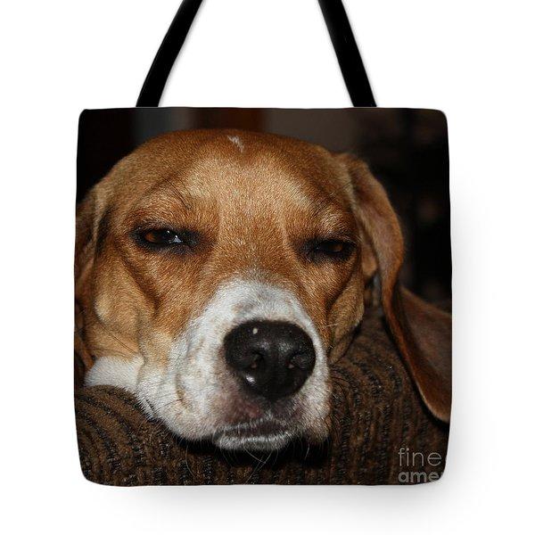 Tote Bag featuring the photograph Sleepy Beagle by John Telfer