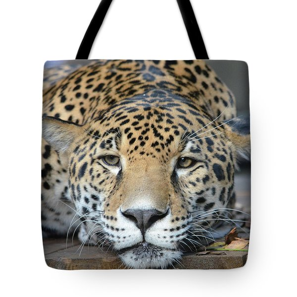 Sleepy Jaguar Tote Bag by Richard Bryce and Family