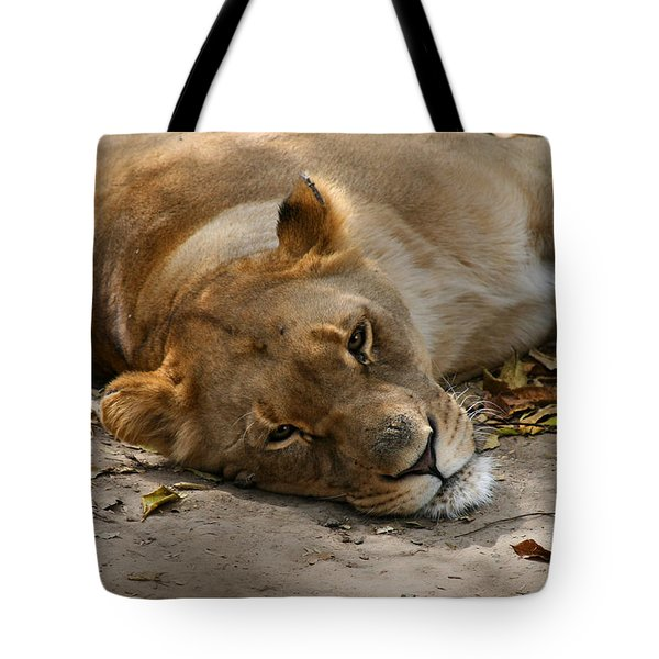 Tote Bag featuring the photograph Sleepy Lioness by Ann Lauwers