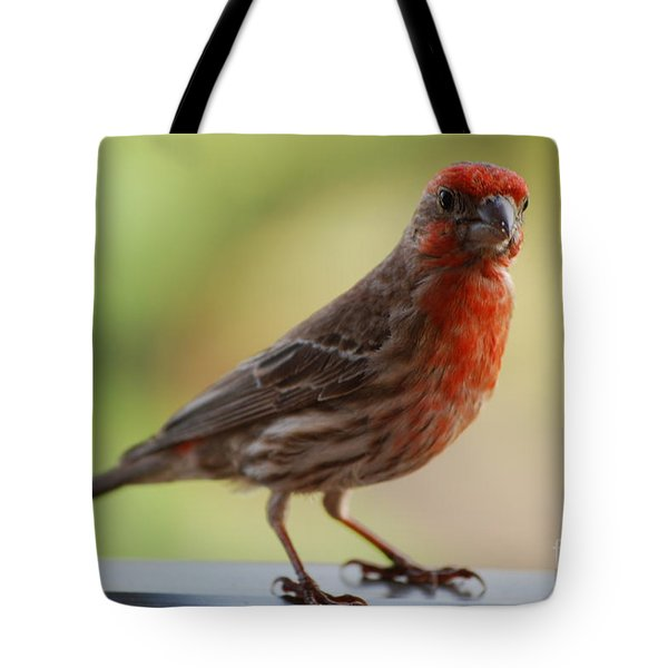 Small Brown And Red Bird Tote Bag by DejaVu Designs