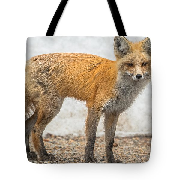 Tote Bag featuring the photograph Smart Like A Fox by Yeates Photography
