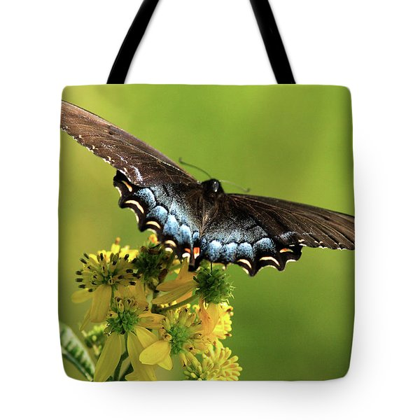 Smoky Mountain Color Tote Bag by Douglas Stucky