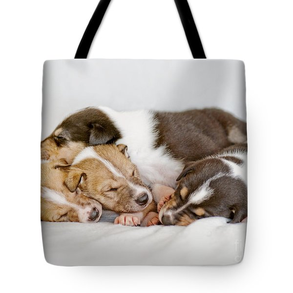 Smooth Collie Puppies Taking A Nap Tote Bag