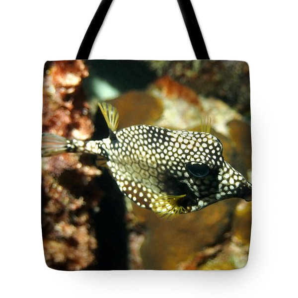 Tote Bag featuring the photograph Smooth Trunkfish by Amy McDaniel