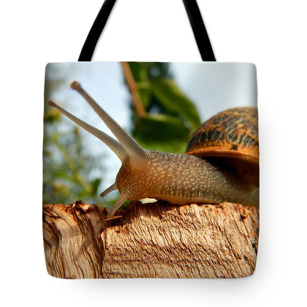 Snail On Wood Tote Bag