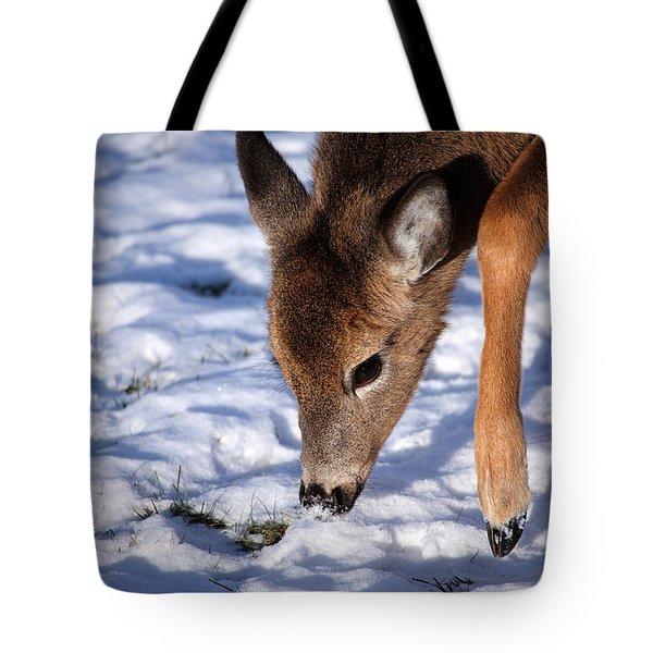 Snow Digging Tote Bag by Karol Livote
