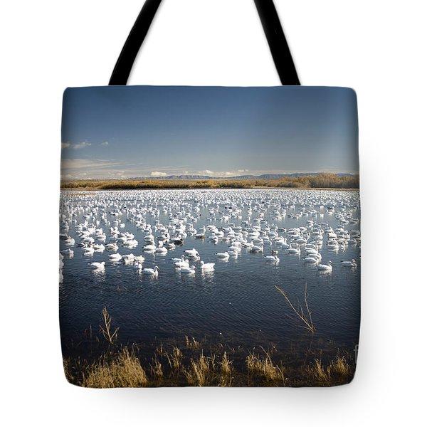 Snow Geese - Bosque Del Apache Tote Bag
