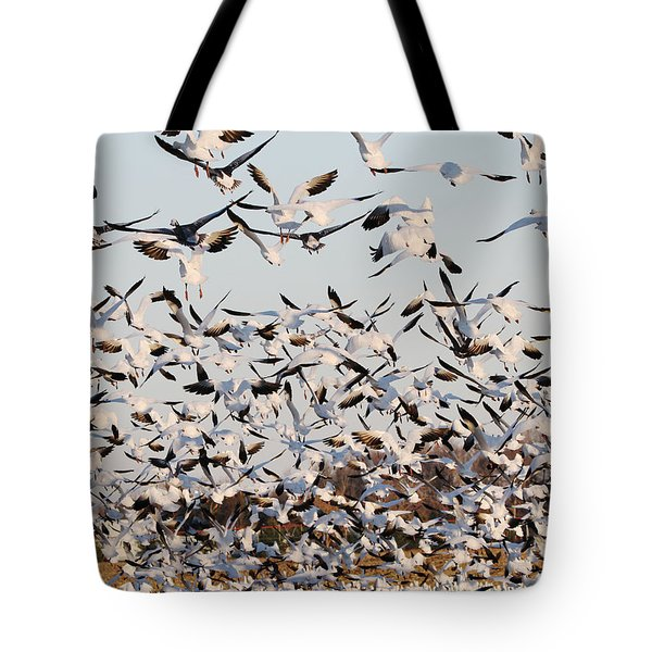 Snow Geese Takeoff From Farmers Corn Field. Tote Bag