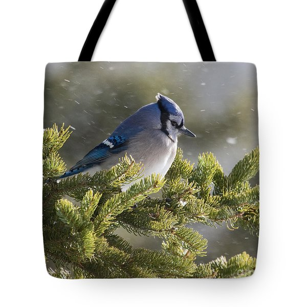 Snowy Day Blue Jay Tote Bag