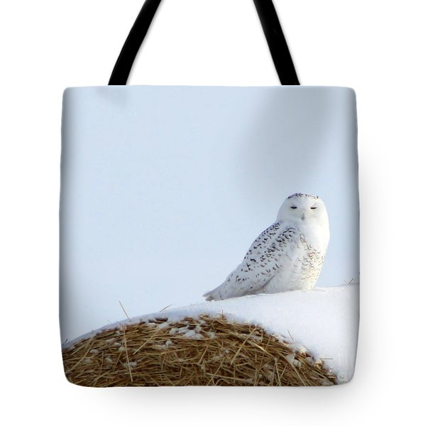 Snowy Owl Tote Bag by Alyce Taylor
