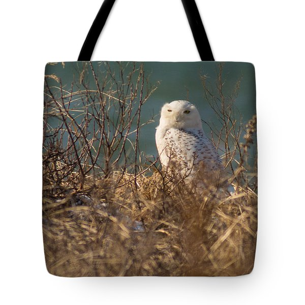 Snowy Owl At The Beach Tote Bag