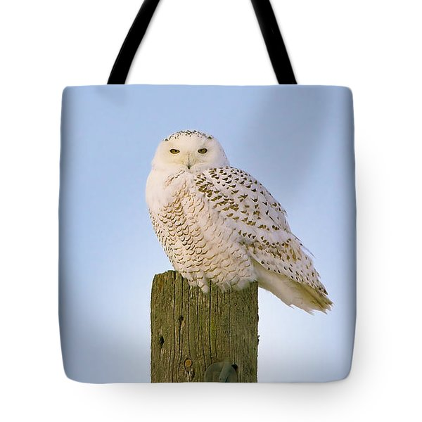 Tote Bag featuring the photograph Snowy Owl - Harfang Des Neiges - Bubo Scandiacus by Nature and Wildlife Photography