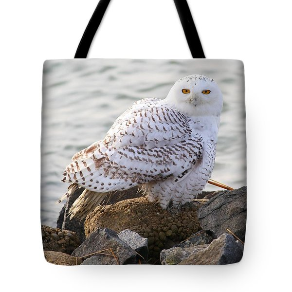 Snowy Owl In New Jersey Tote Bag