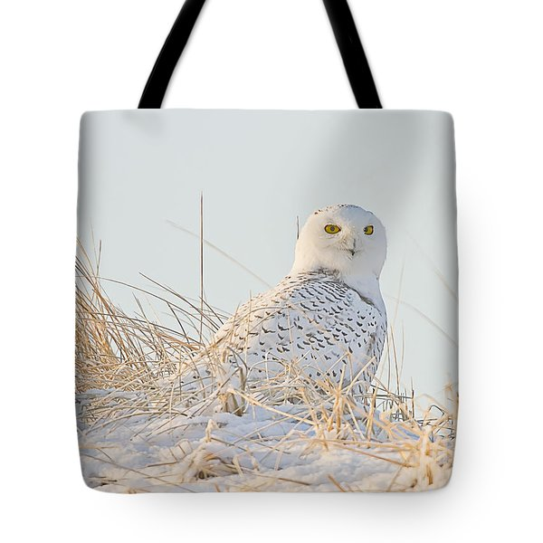 Snowy Owl In The Snow Covered Dunes Tote Bag