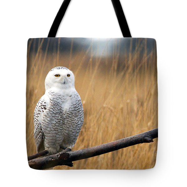 Snowy Owl On Branch Tote Bag
