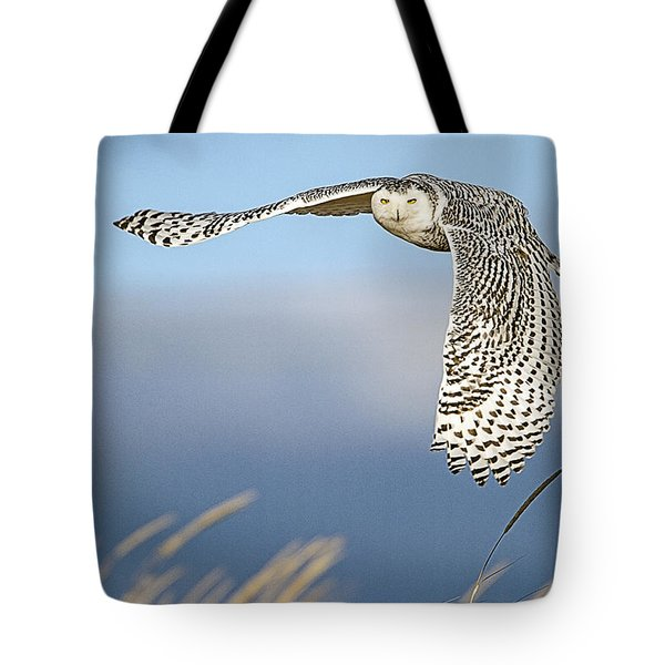 Snowy Owl Over The Dunes Tote Bag