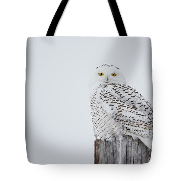 Snowy Owl Perfection Tote Bag by Cheryl Baxter