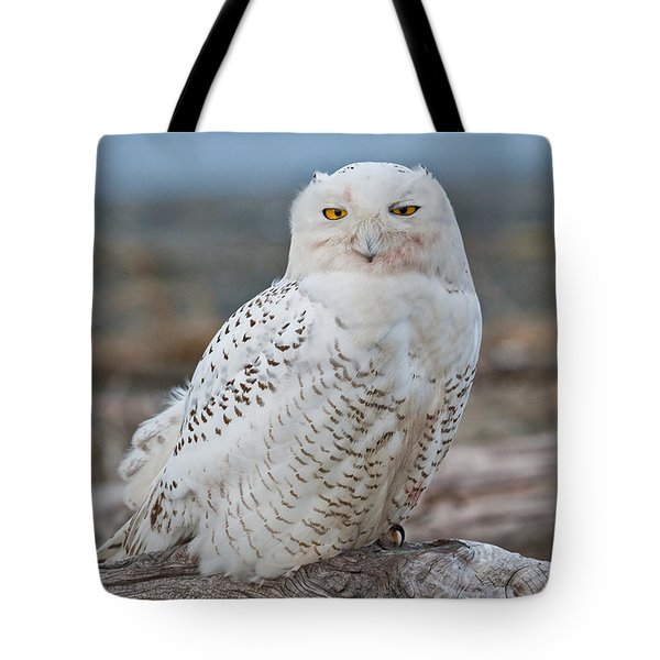 Snowy Owl Watching From A Driftwood Perch Tote Bag