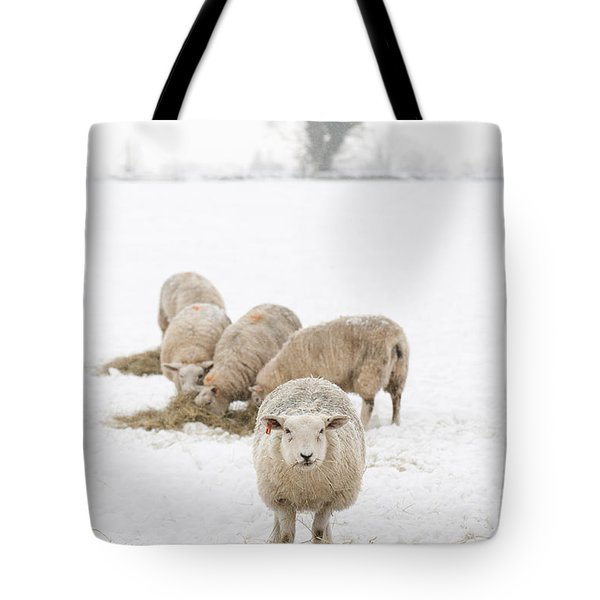 Snowy Sheep Tote Bag by Anne Gilbert