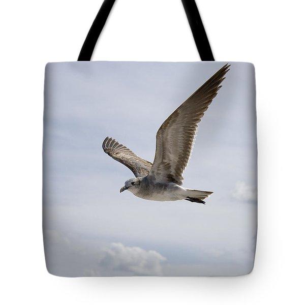 Soaring Gull Tote Bag