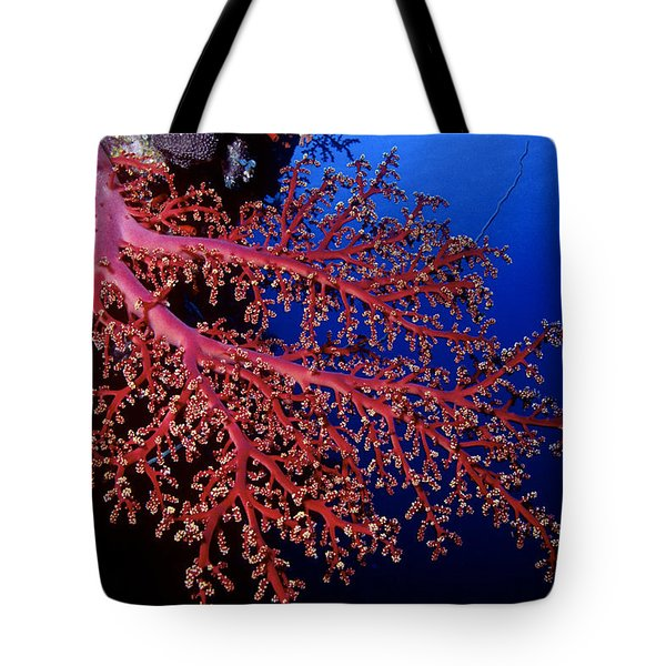 Soft Coral Tote Bag