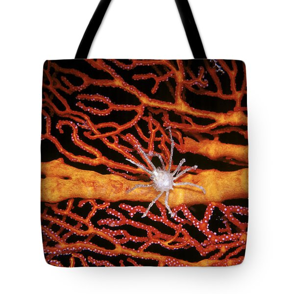 Soft Coral Crab On Red Gorgonian Tote Bag