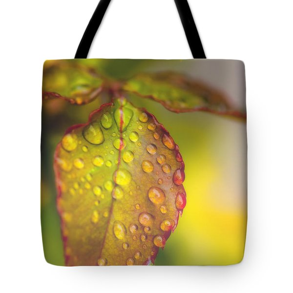 Soft Morning Rain Tote Bag by Stephen Anderson