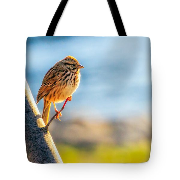 Song Sparrow Tote Bag