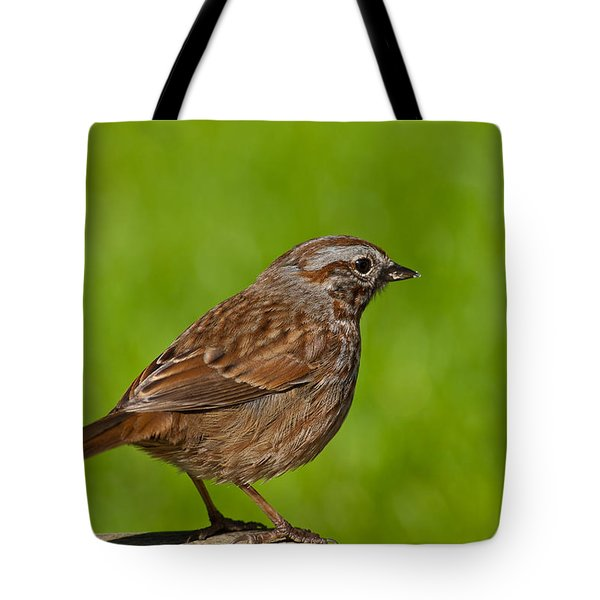 Song Sparrow On A Log Tote Bag