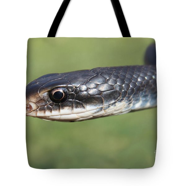 Southern Black Racer Tote Bag