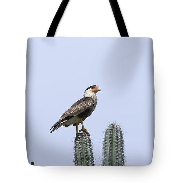 Tote Bag featuring the photograph Southern Crested-caracara Polyborus Plancus by David Millenheft