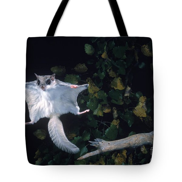 Southern Flying Squirrel Tote Bag by Nick Bergkessel Jr