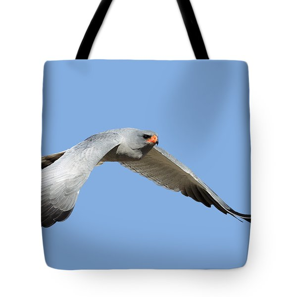 Southern Pale Chanting Goshawk In Flight Tote Bag by Johan Swanepoel