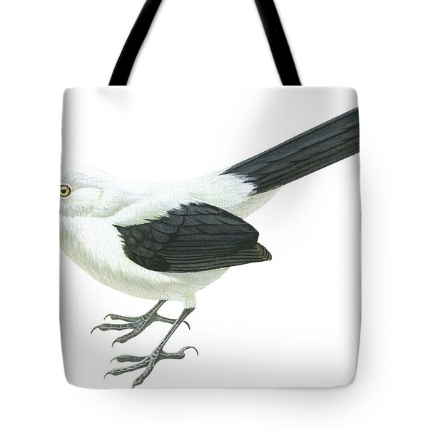 Southern Pied Babbler  Tote Bag by Anonymous
