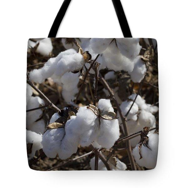 Southern Plantation Cotton Tote Bag by Kathy Clark