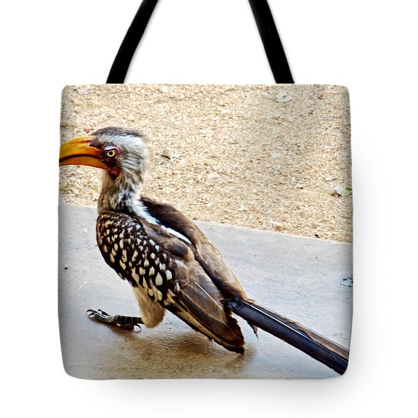 Southern Yellow-billed Hornbill In Kruger National Park-south Africa Tote Bag